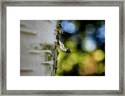A Walk In The Woods Is Good For The Soul Framed Print