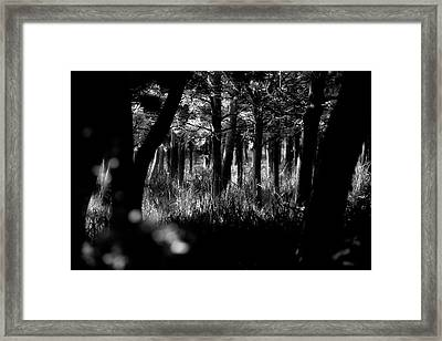 Framed Print featuring the photograph A Walk In The Woods by Jeremy Lavender Photography