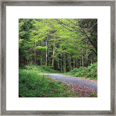 A Walk In The Woods Framed Print by Tom  Doherty
