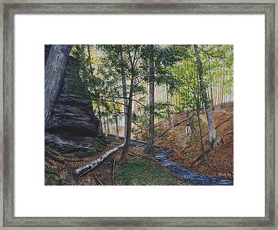 A Walk In The Woods Framed Print by Vicky Path