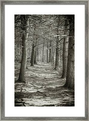 A Walk In Walden Woods Framed Print by Ike Krieger