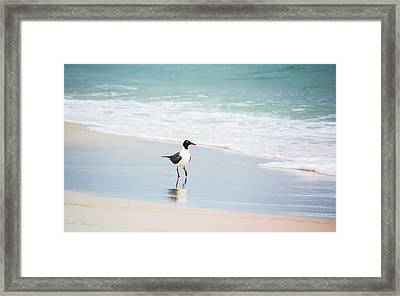 A Walk On The Beach Framed Print by Shelby  Young