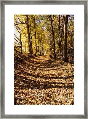 A Walk On The Old Trace - Natchez Trace Framed Print by Debra Martz