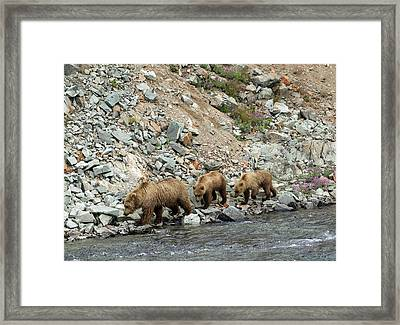 Framed Print featuring the photograph A Walk On The Wild Side by Cheryl Strahl