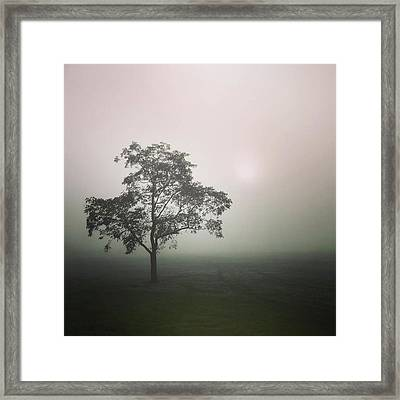 A Walk Through The Clouds #fog #nuneaton Framed Print