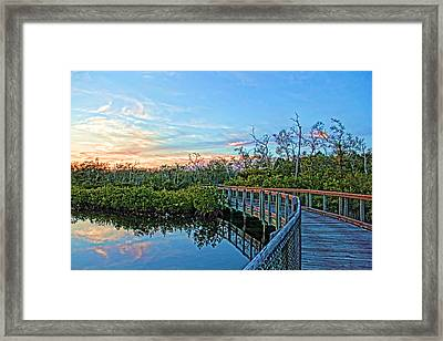 A Walk Through The Mangroves Framed Print by HH Photography of Florida