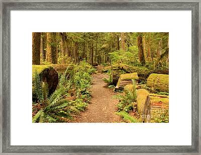 A Walk Through The Rainforest Framed Print