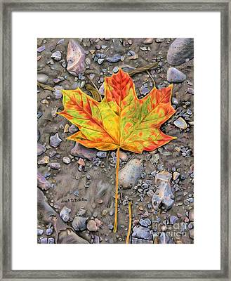 A Walk Through The Woods Framed Print by Sarah Batalka