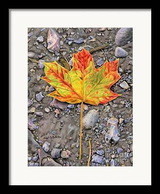 Mud Season Framed Prints