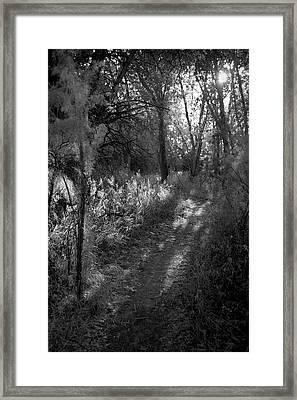 A Walk Towards The Sun Bw Framed Print