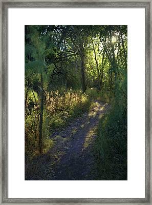 A Walk Towards The Sun Framed Print