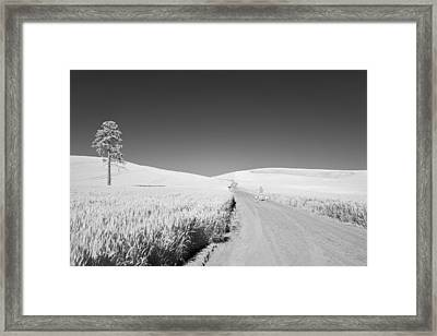 A Walk With My Dogs Framed Print by Jon Glaser