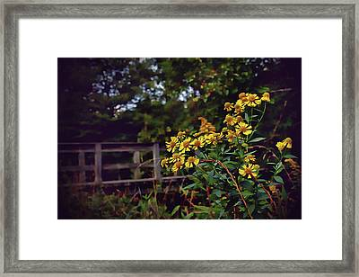 Framed Print featuring the photograph A Walk With Wildflowers by Jessica Brawley
