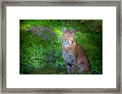 A Watchful Eye Framed Print
