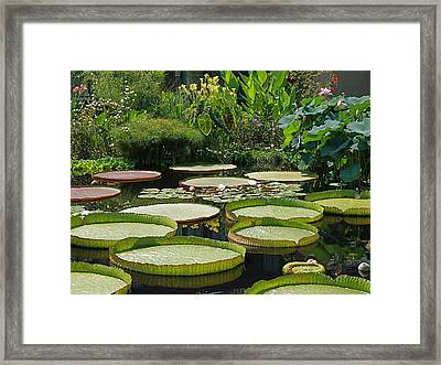 Framed Print featuring the photograph A Water Garden by Byron Varvarigos
