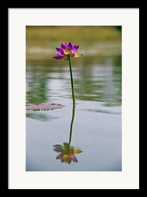 Limmen National Park Framed Prints