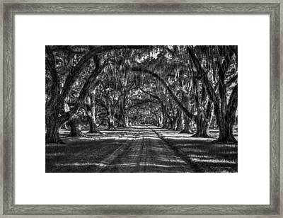 The Majestic Way Live Oaks Tomalley Plantation South Carolina Framed Print by Reid Callaway