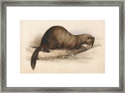 A Weasel Framed Print by Edward Lear