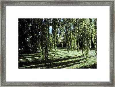 A Weeping Willow Casts Long, Cool Framed Print by Jason Edwards
