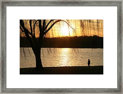 A Weeping Willow Curtains A Walker Framed Print by Stephen St. John