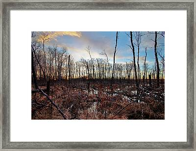 A Wet Decay Framed Print