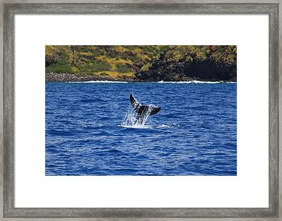 A Whale Of A Time Framed Print by Brian Governale