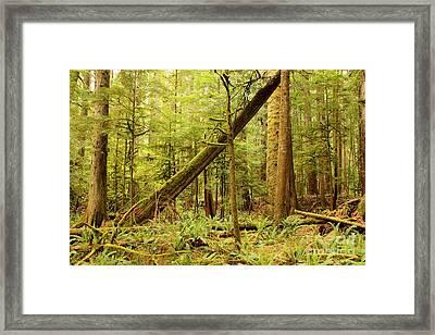 A Whisper In The Rainforest Framed Print by Carol Groenen