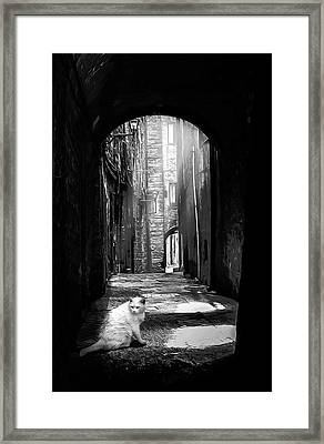 A White Cat In A Dark Alley Framed Print