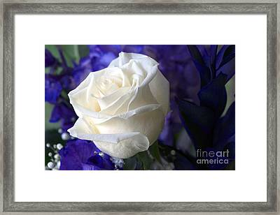 A White Rose Framed Print