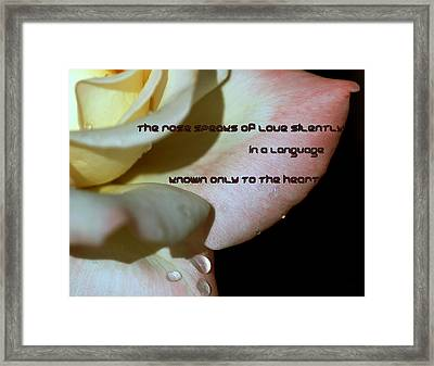 A White Rose Speaks Of Love Framed Print by Irma BACKELANT GALLERIES