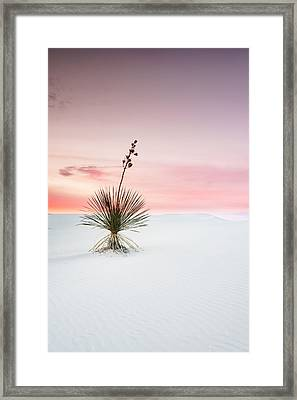 A White Sands Yucca Under Dreamy Sky - New Mexico Framed Print by Ellie Teramoto