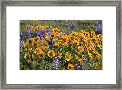 A Wild Bouquet  Framed Print by Lynn Hopwood