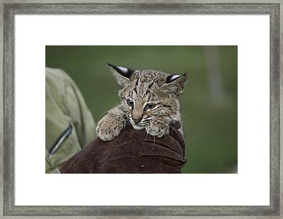 A Wildlife Rescue Member Holds Framed Print