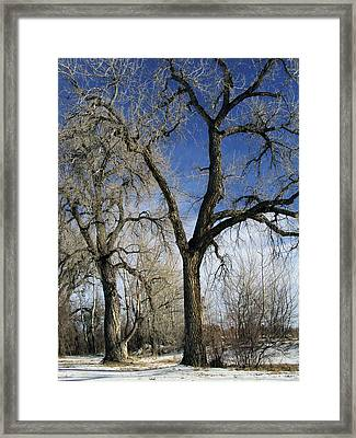 A Winter Kiss Framed Print by Angelina Vick
