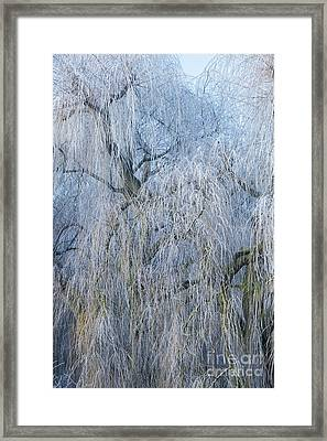 A Winter Willow Weeps Framed Print by Tim Gainey