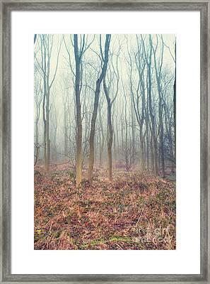 A Winter Woodland Framed Print by Tom Gowanlock