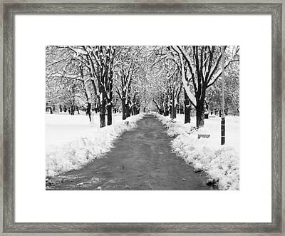 A Winter's Path Framed Print by Rae Tucker