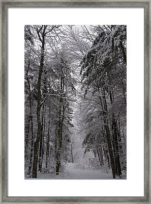 A Winters Path Framed Print