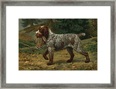 A Wire-haired Pointing Griffon Holds Framed Print
