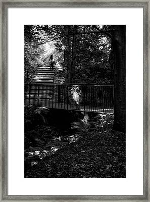 Framed Print featuring the photograph A Woman Walking Her Dog At Pittencrieff Park by Jeremy Lavender Photography