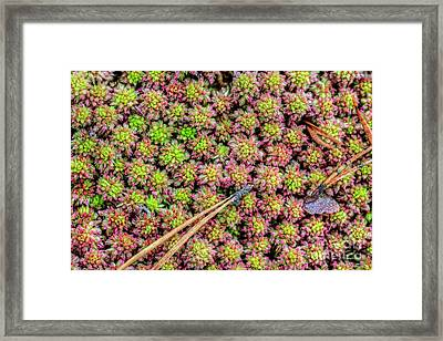 A Wonderful Surprise Framed Print