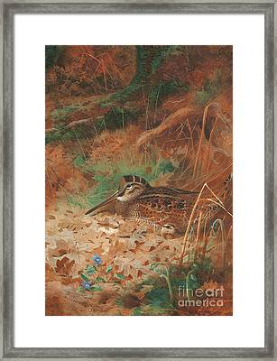 A Woodcock And Chick In Undergrowth Framed Print by Archibald Thorburn