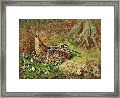 A Woodcock And Chicks Framed Print by Archibald Thorburn