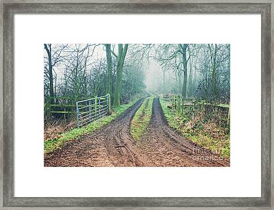 A Woodland Path Framed Print by Tom Gowanlock