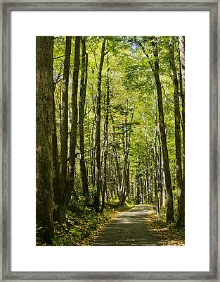 A Woodsy Trail Framed Print