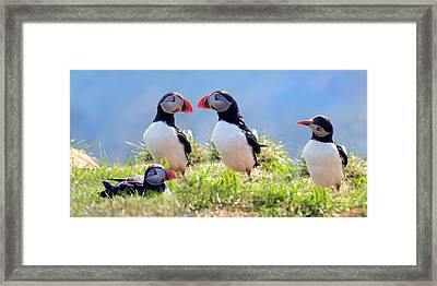 A World Of Puffins Framed Print
