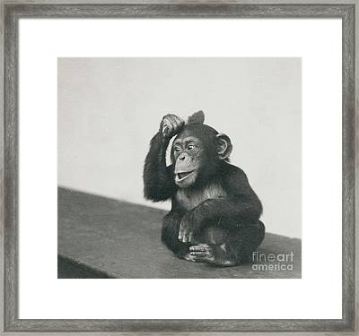 A Young Chimpanzee Playing With A Brush Framed Print