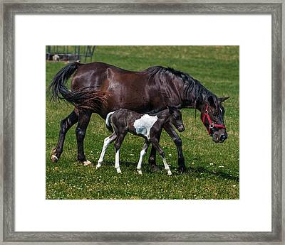 A Young Horse With It's Mother Framed Print by Mark Preston