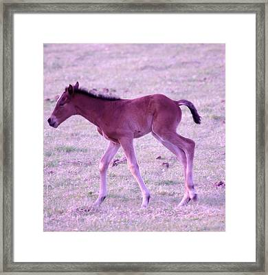 A Young Spring Colt  Framed Print by Jeff Swan