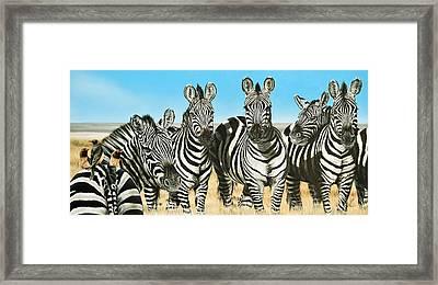 A Zeal Of Zebras Framed Print
